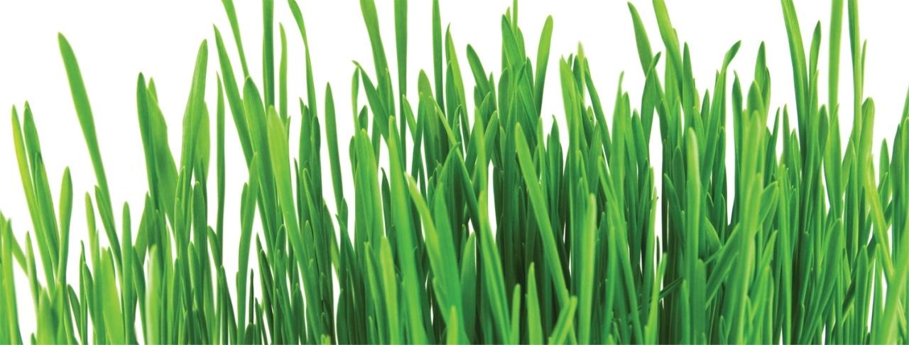 comment bien diagnostiquer votre pelouse eco verdure. Black Bedroom Furniture Sets. Home Design Ideas