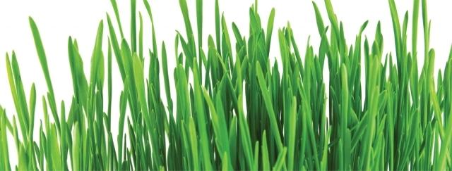Comment bien diagnostiquer votre pelouse?