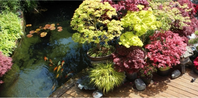 Les plantes singulières, vedettes du jardin