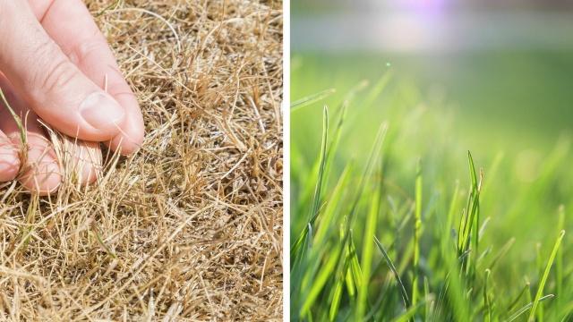 Raisons empêchant la tonte de votre pelouse