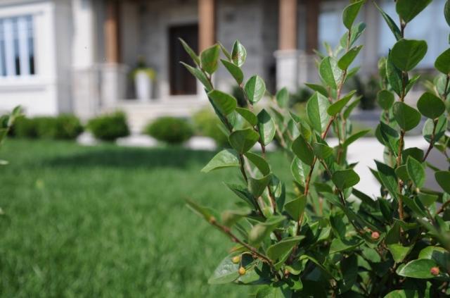 Réussir son aménagement paysager : les conseils d'une pro